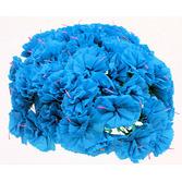 Cinco de Mayo Decorations Turquoise Carnations Image