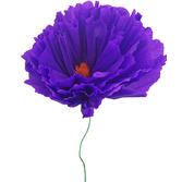 Cinco de Mayo Large Dahlia Flower Image