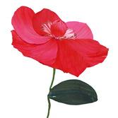 Cinco de Mayo Decorations Cornhusk Poppy Flower Image