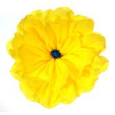 Cinco de Mayo Decorations Rachel's Yellow Flower Image