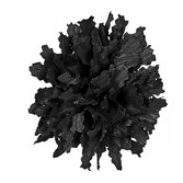 Halloween Decorations Black Marigold Image